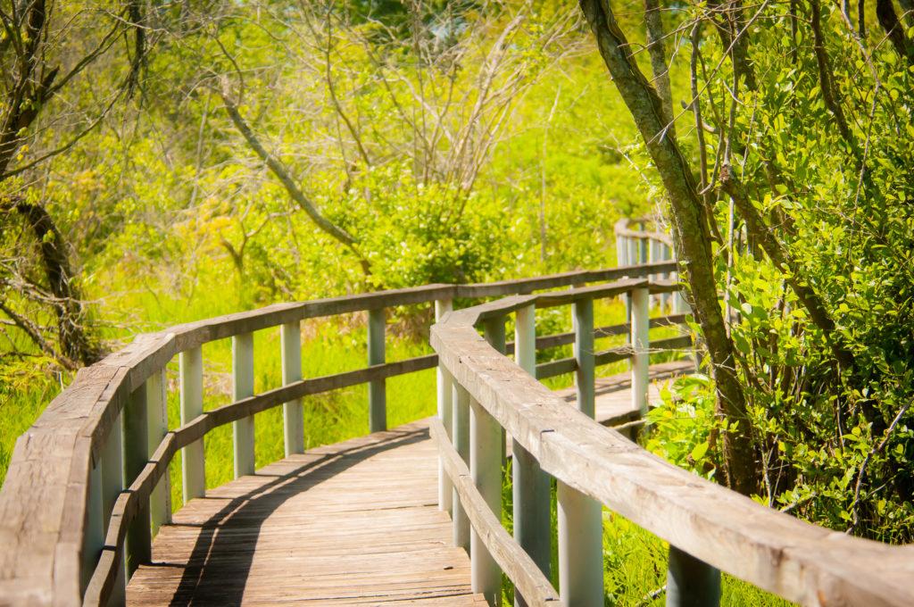 kevin e beasley boardwalk alligator creek