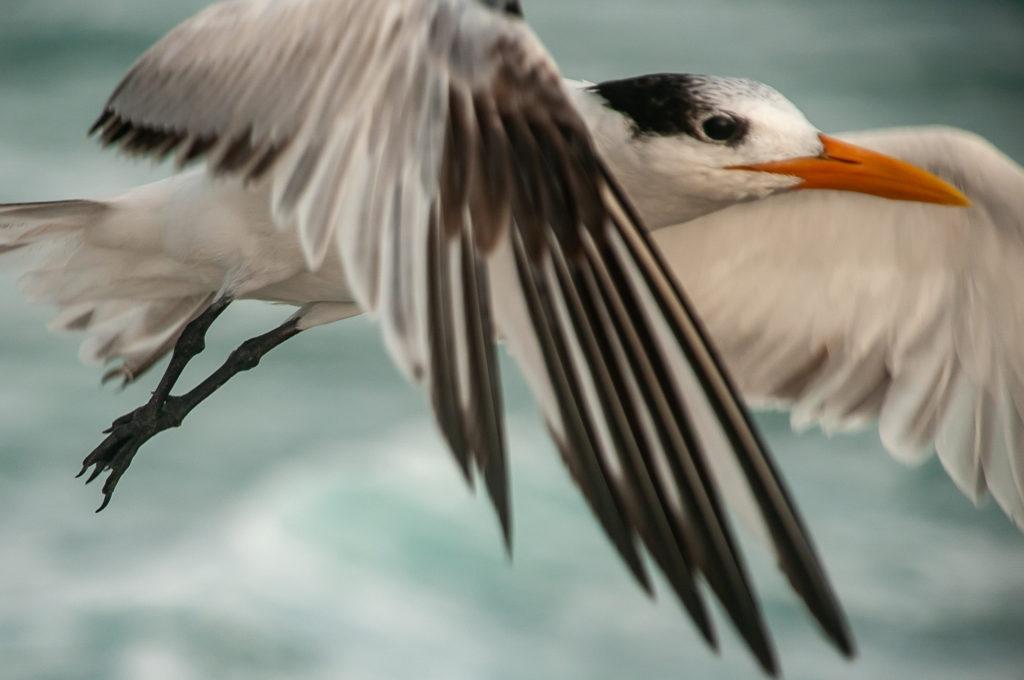 kevin e beasley seagull in flight