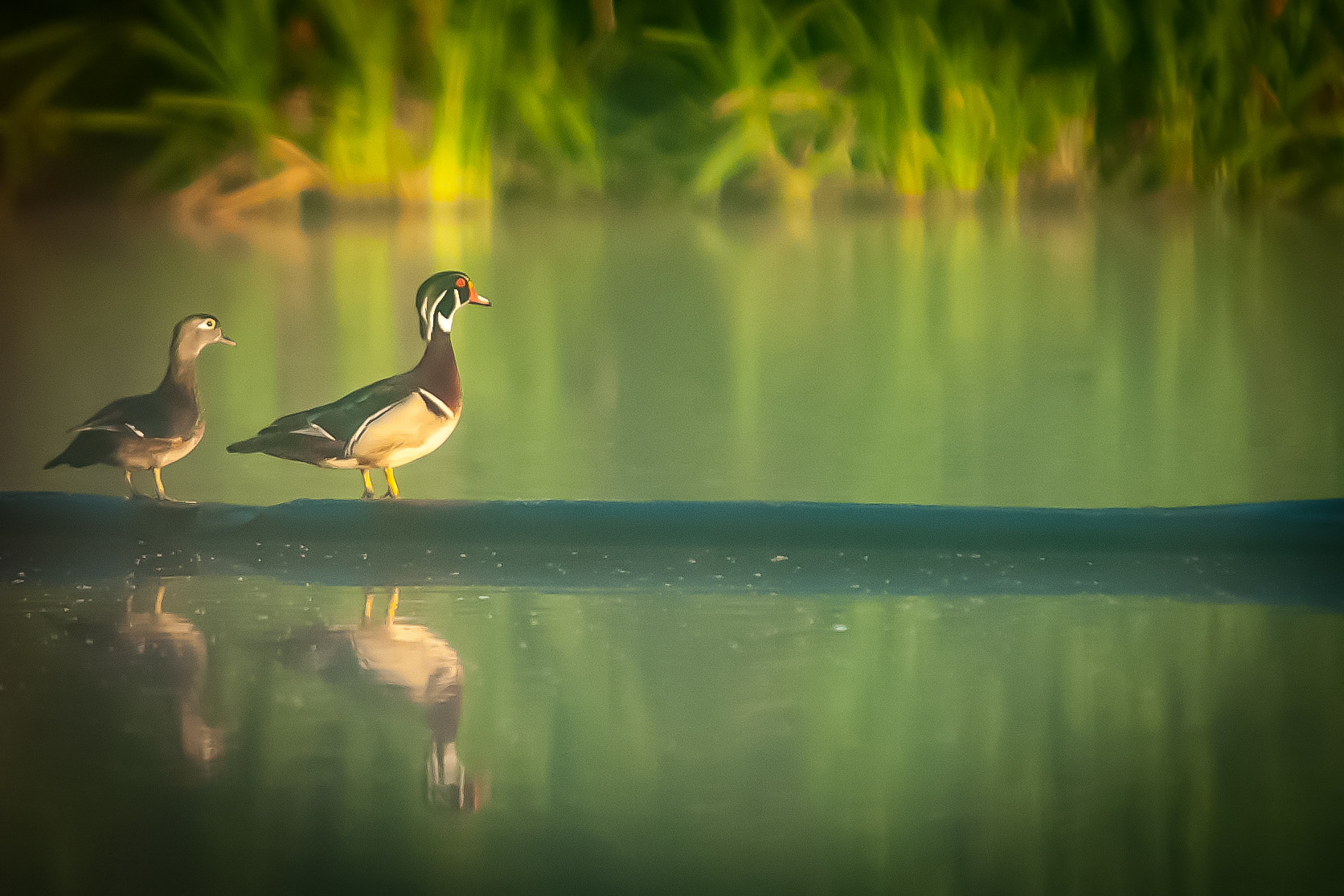 A Morning at the Wood Duck Heritage Preserve in Opelika Alabama
